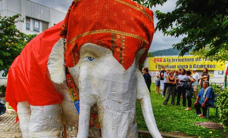Fralib : l'éléphant de la discorde