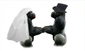 amour mariage gay