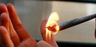 cannabis mark haskell smithe defonce