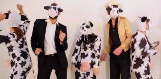 clip vache musique