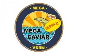 dessin groin caviar