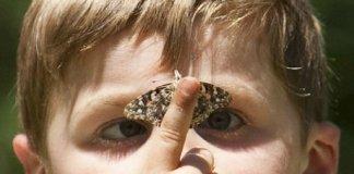 trisomie eugenisme papillon