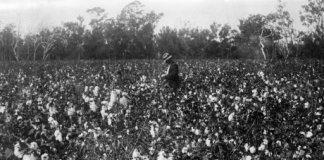 champs cotton pauvrete