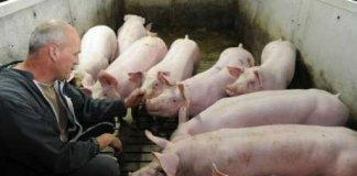 crise porc euro lefoll