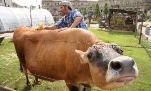 ferme mille vaches bruxelles