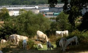 montlucon industrie dunlop landis