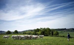 animaux vegans fontenay antispecisme