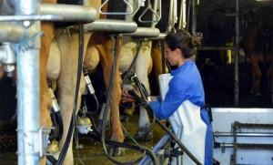 eleveurs lait lactalais europe