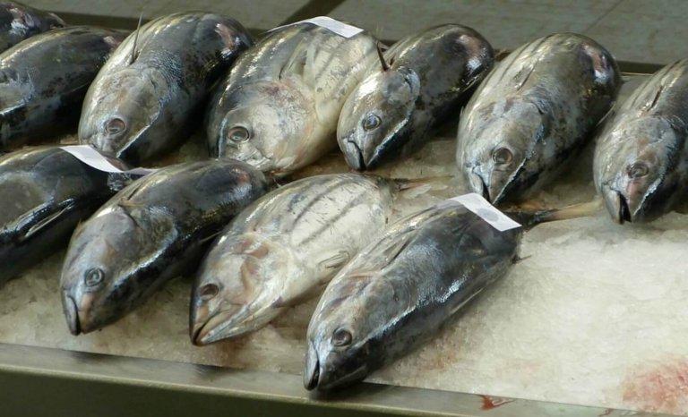 Nous sommes tous des saumons, et autres vérités