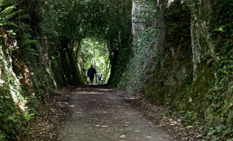 Valère-Marie Marchand, l'auteur qui murmurait à l'écorce des arbres