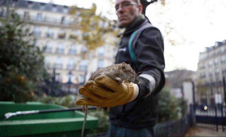 """""""Contre les rats, Anne Hidalgo doit enfin prendre les décisions qui s'imposent"""""""