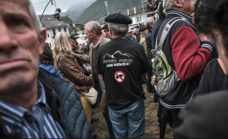 Ours dans les Pyrénées: bobos contre bergers, le dialogue de sourds