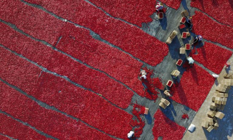 Salades, tomates, pognon: voyage aux pays de l'or rouge