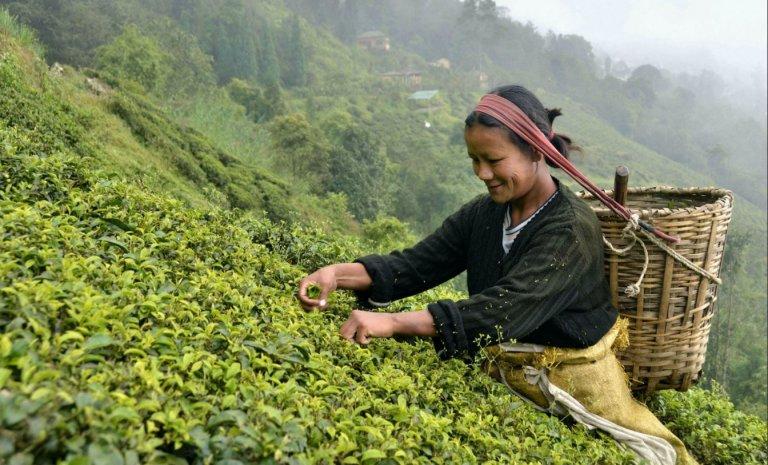 Un thé dans l'Himalaya