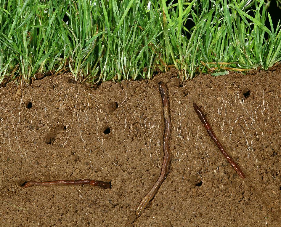Le sol est un écosystème vivant, une couche peu épaisse, mais essentielle, qui forme le système digestif de la planète. ©ARDEA/MARY EVANS/SIPA