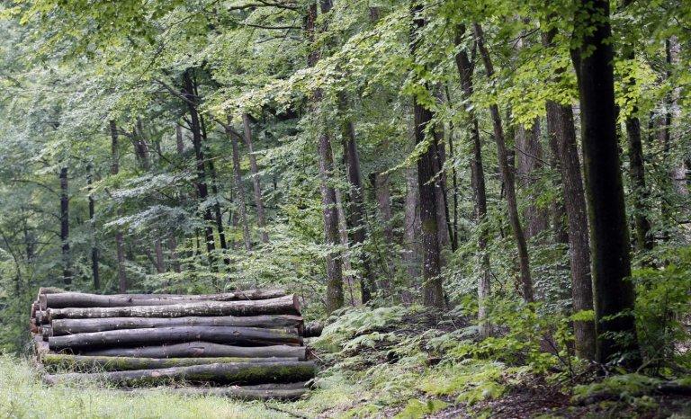 Yves Amiot ou le recours aux forêts