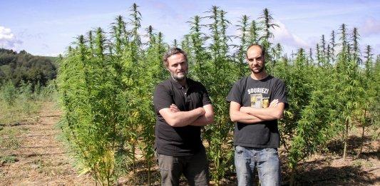 creuse cannabis ppc cbd
