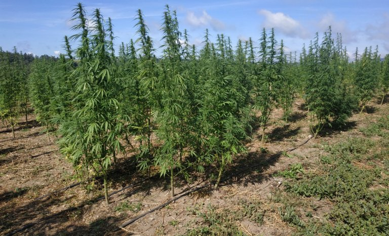 Meurtre de Sarah Halimi: le cannabis n'atténue pas la barbarie