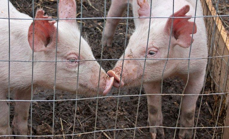 Nord: agriculteurs et éleveurs se serrent les coudes contre les néoruraux