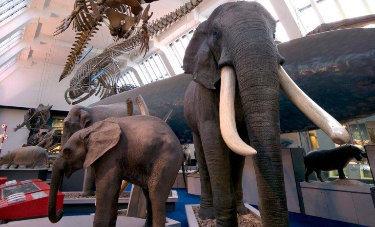 Pas assez de femelles au Muséum d'histoire naturelle de Londres!