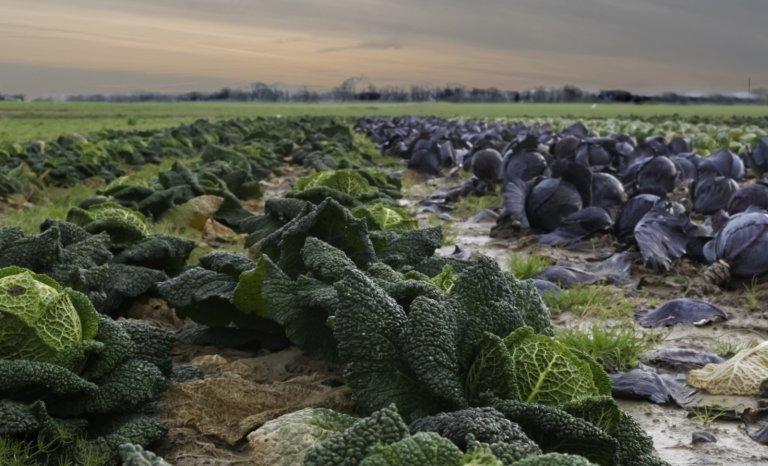 Le niveau de résilience alimentaire de la France est très bas