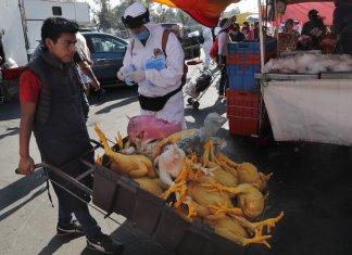 mexique covid corona confinement