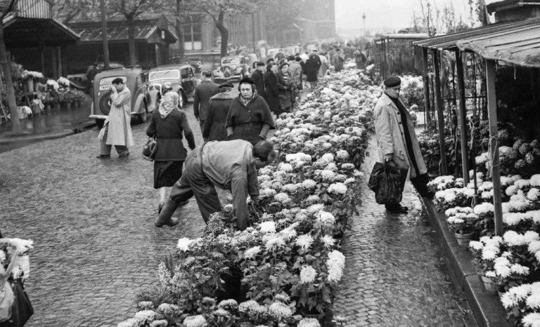 Île de la Cité/marché aux fleurs: il faut craindre le pire