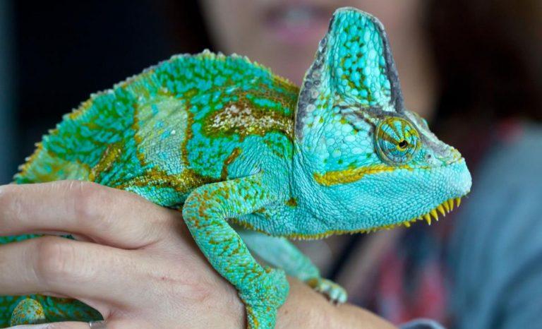 Beau temps pour les reptiles
