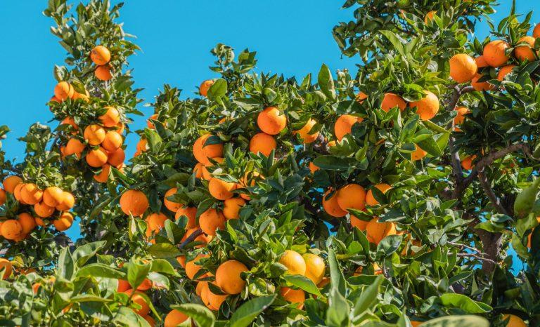Dernières nouvelles d'Afrique du Sud: les oranges et l'arc-en-ciel