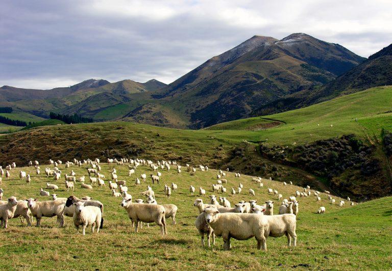 Changement climatique: les riches déménagent en Nouvelle-Zélande